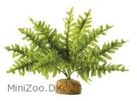 Exo Terra Boston Fern (lille)