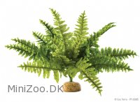 Exo Terra Boston Fern (medium)