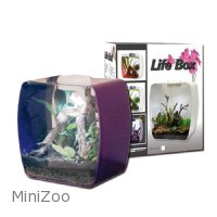 Lucky Reptile Life Box 35 Purple